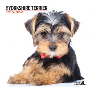 Calendario Yorkshire Terrier