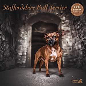 Calendario deluxe Staffordshire bull terrier