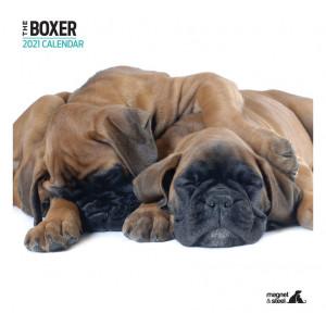 Calendario De Boxer
