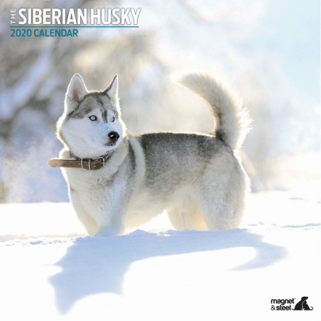 Calendario Siberian Husky