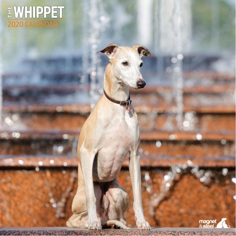 Calendario De Whippet