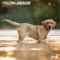 Calendario De Labrador Yellow